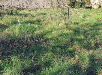 Vente terrain – Ingrandes